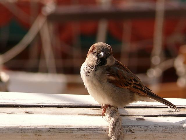 ptáček na laně