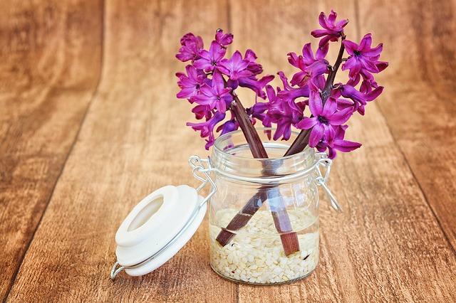 fialový hiacint
